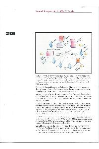 Digital Equipment Corp. (DEC) - Network Integration for then IBM PC Family